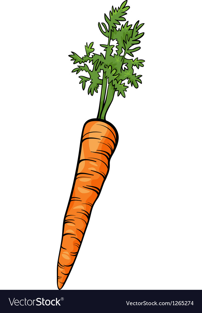 Carrot root vegetable cartoon vector image