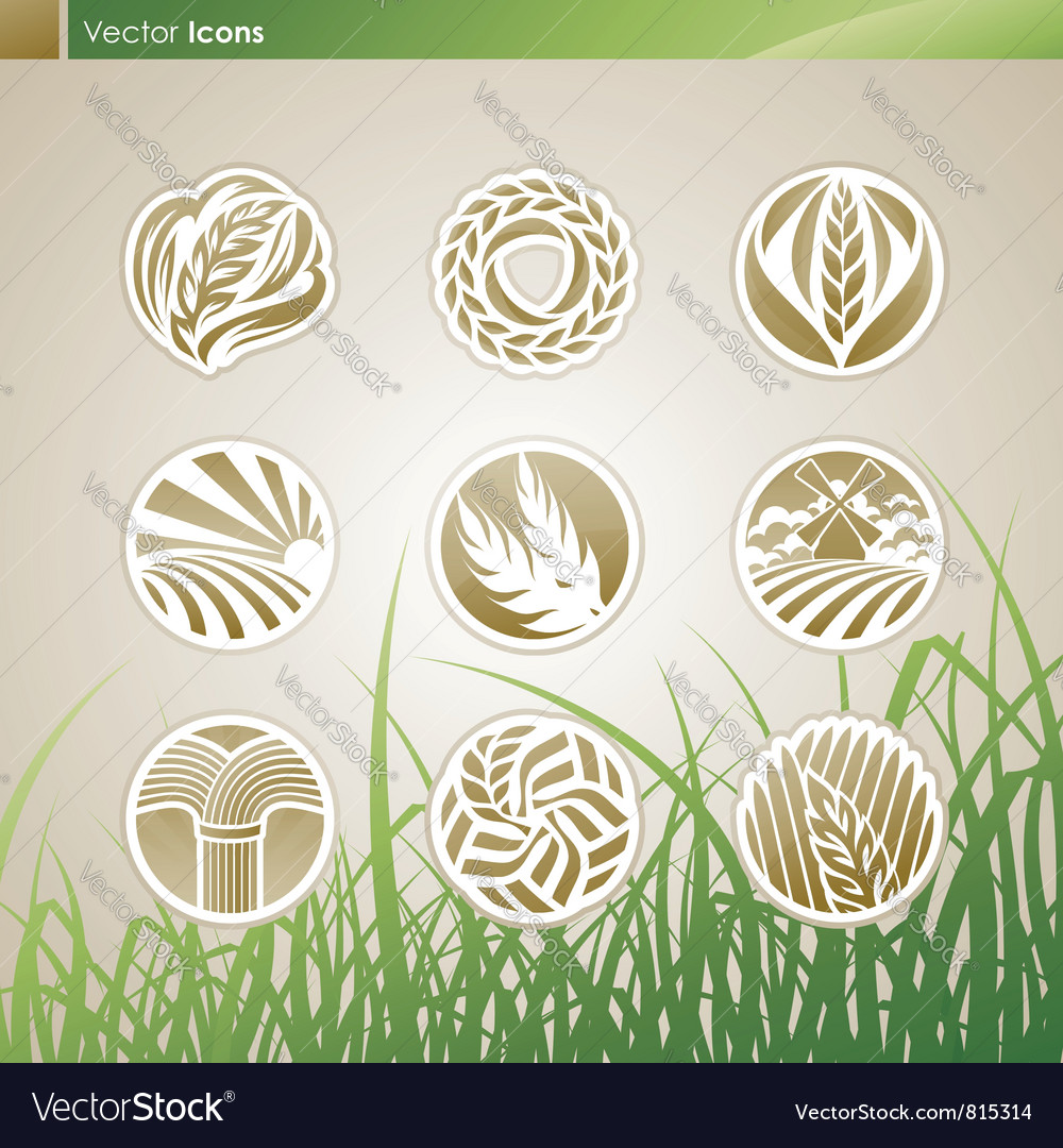 Wheat and rye logo vector image