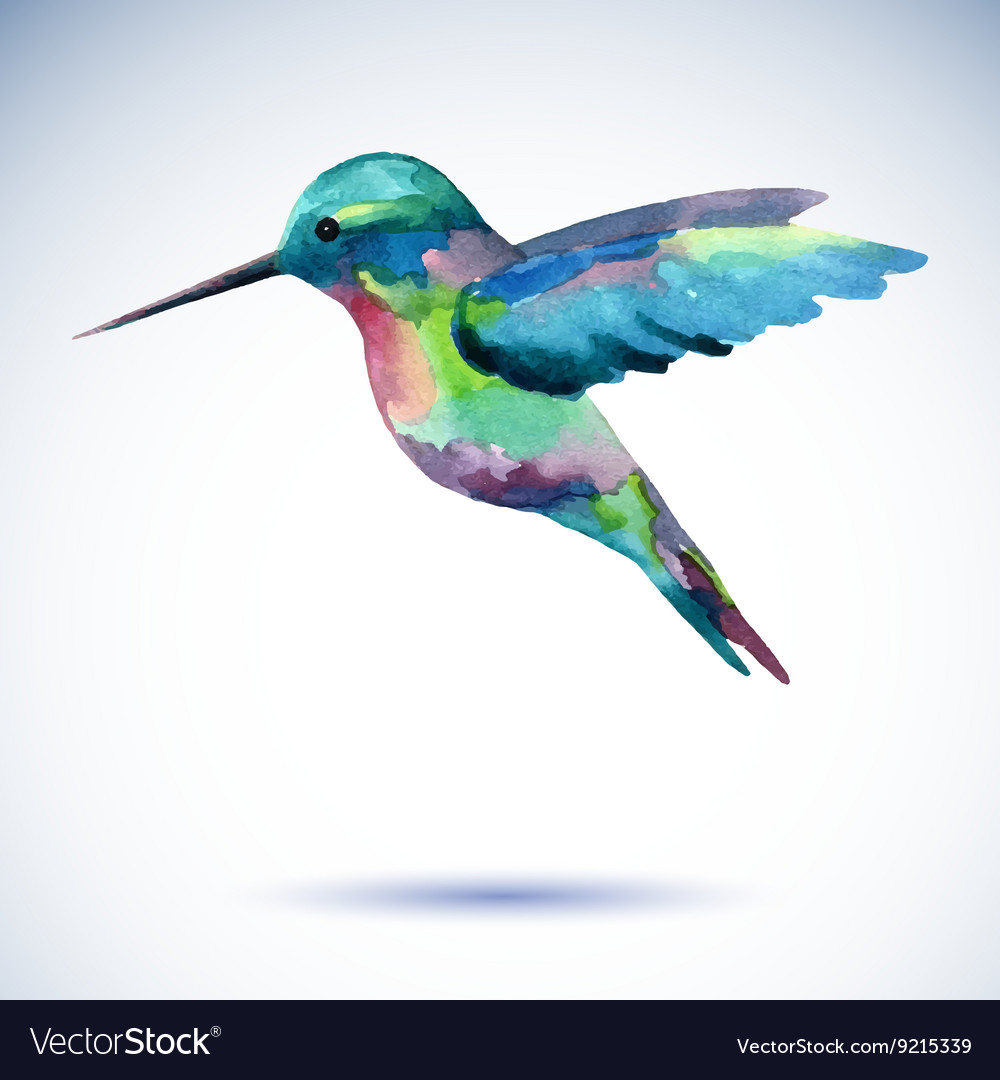 Hummingbird watercolor painting bird on the white vector image