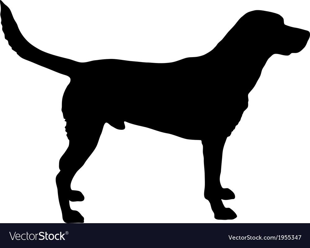 Labrador silhouette vector image