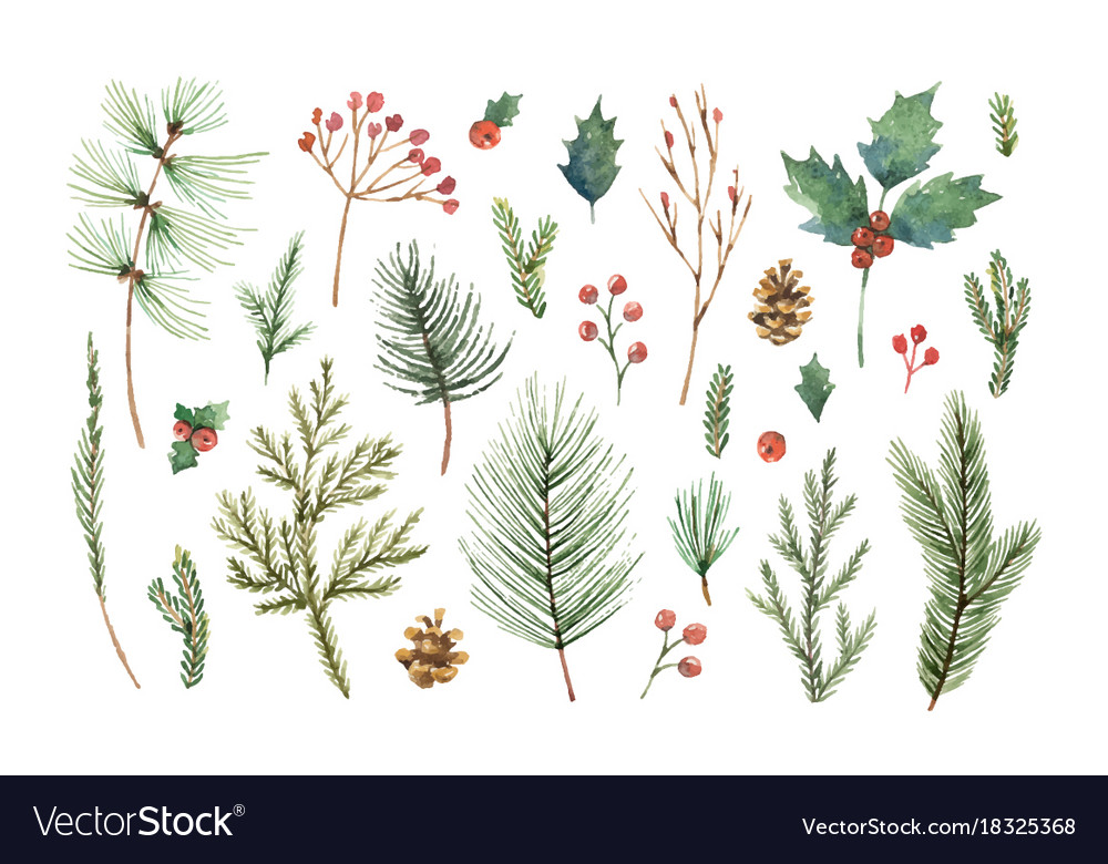 Watercolor christmas set with evergreen vector image