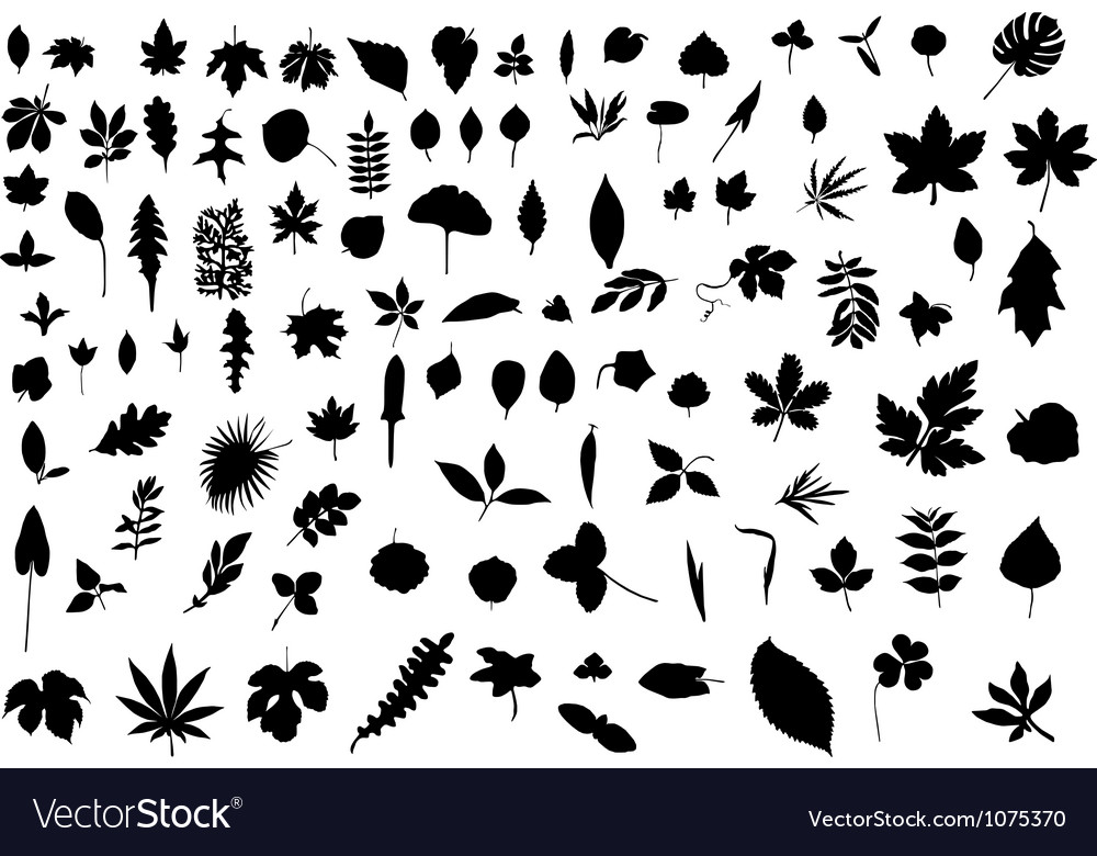 100 leaves vector image