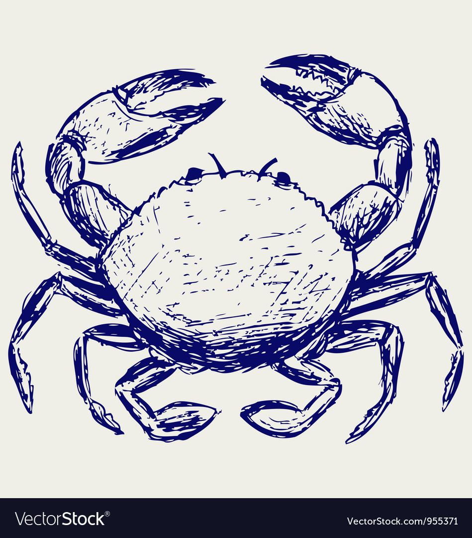 Crab sketch vector image