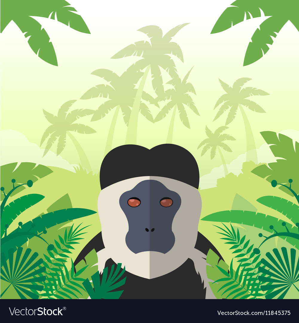 Colobus on the Jungle Background vector image