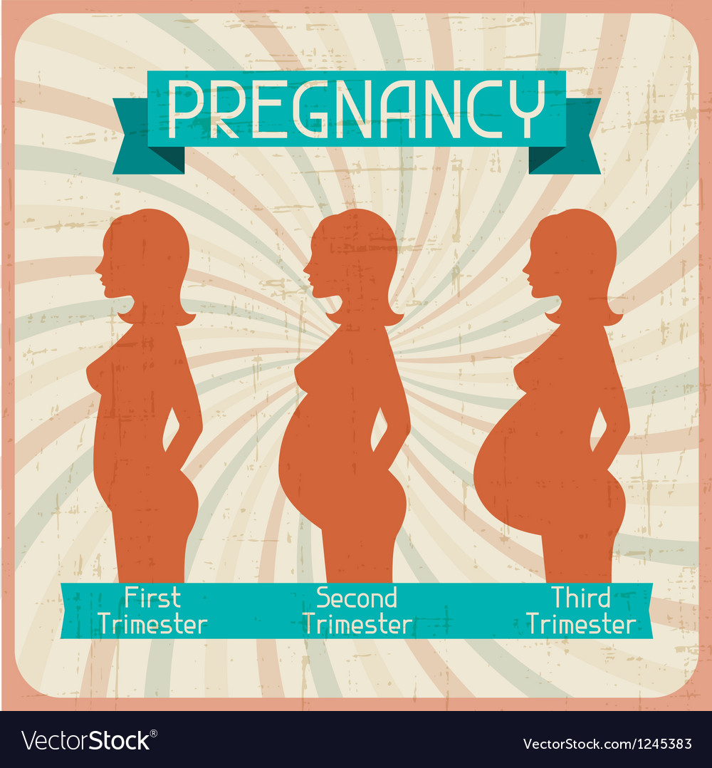 Silhouette of a pregnant woman in the three vector image
