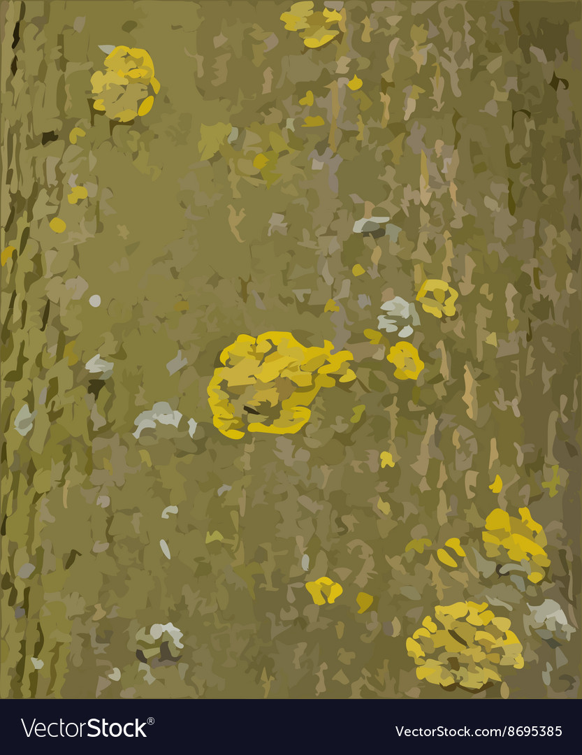 Tree bark with lichens texture vector image