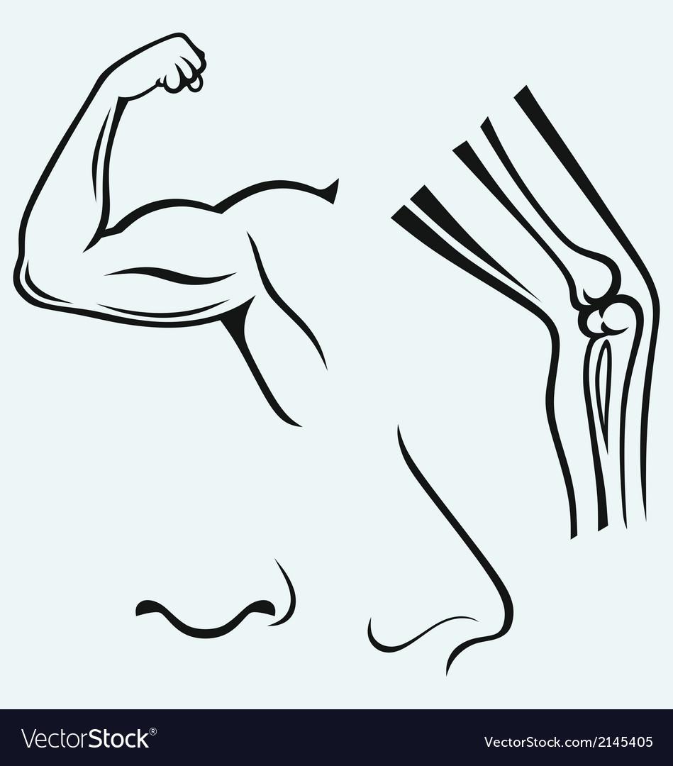 Human body parts vector image
