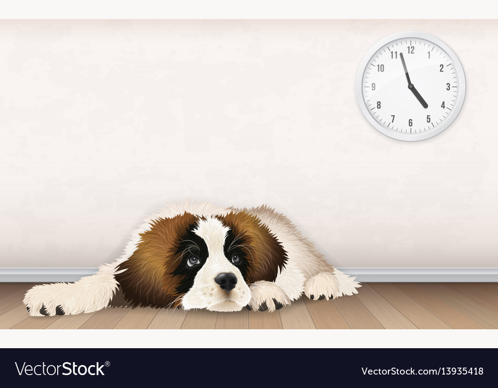 Sweet fluffy puppy is waiting vector image