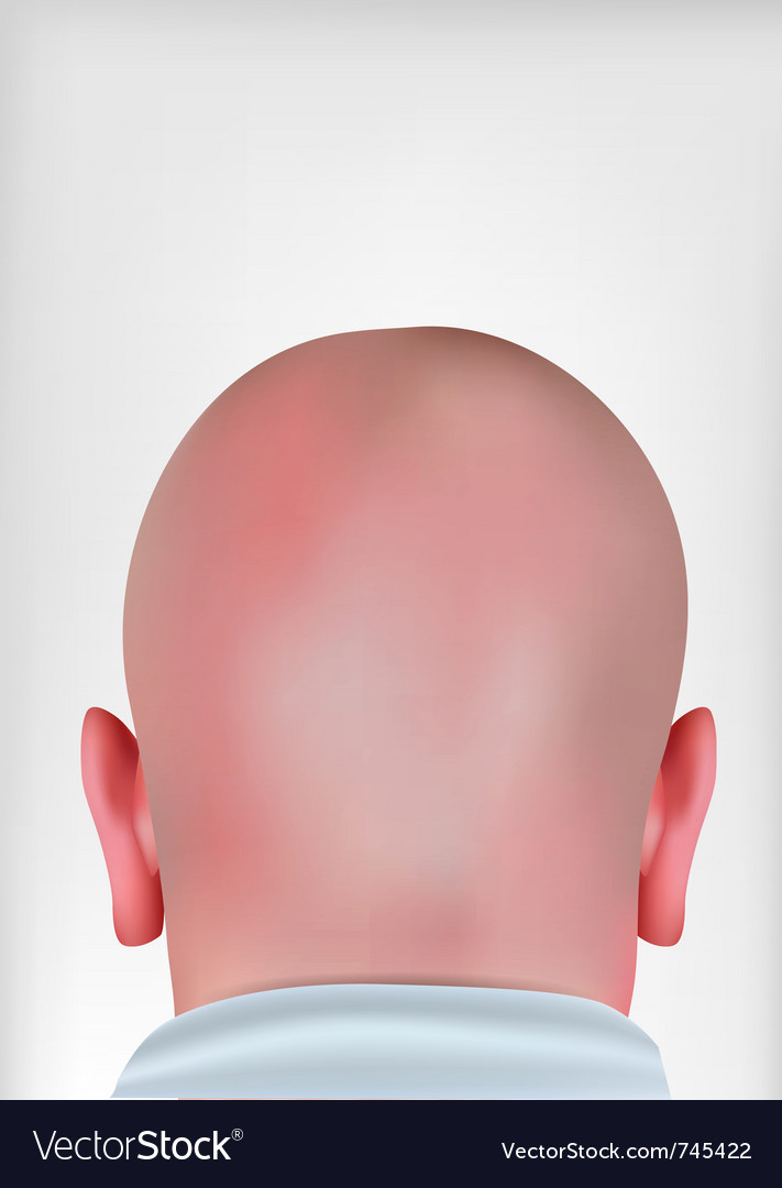 Realistic bald head vector image