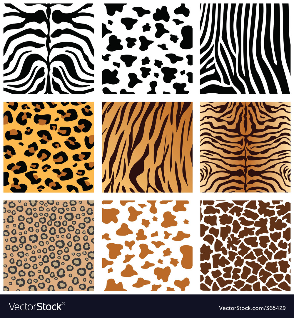 Animal prints vector image