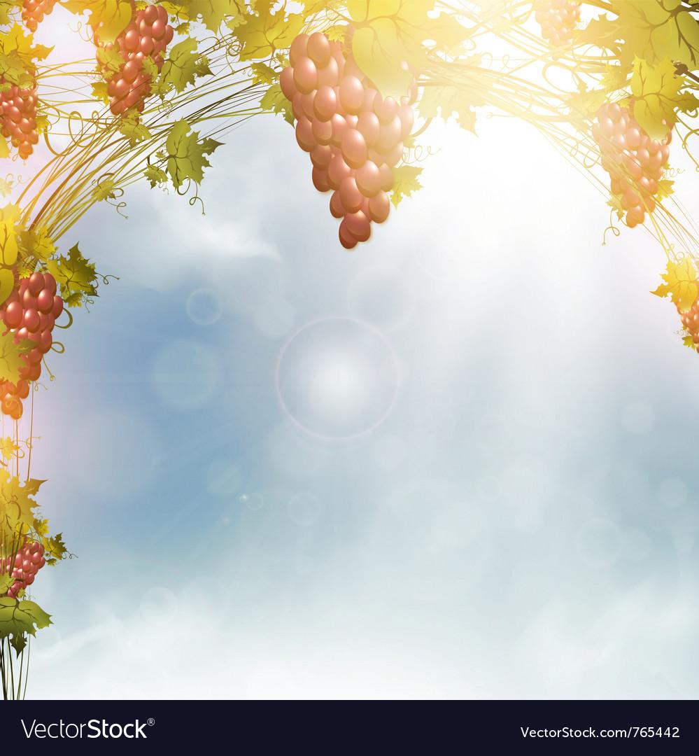 Red grape vine frame vector image