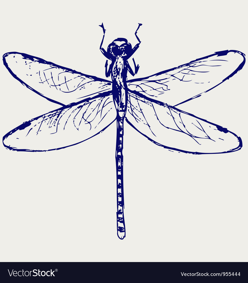 dragonfly royalty free vector image vectorstock rh vectorstock com dragonfly vector images dragonfly vector clipart