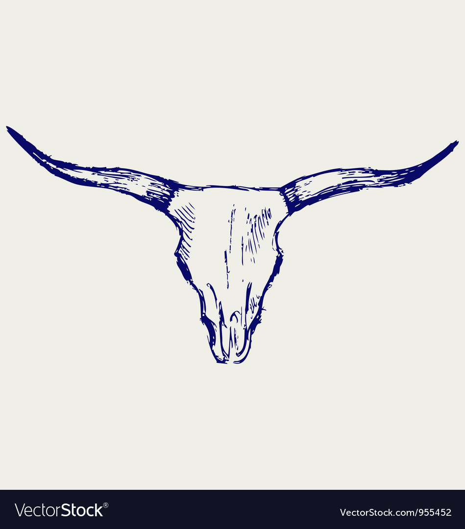 Head skull of bull vector image
