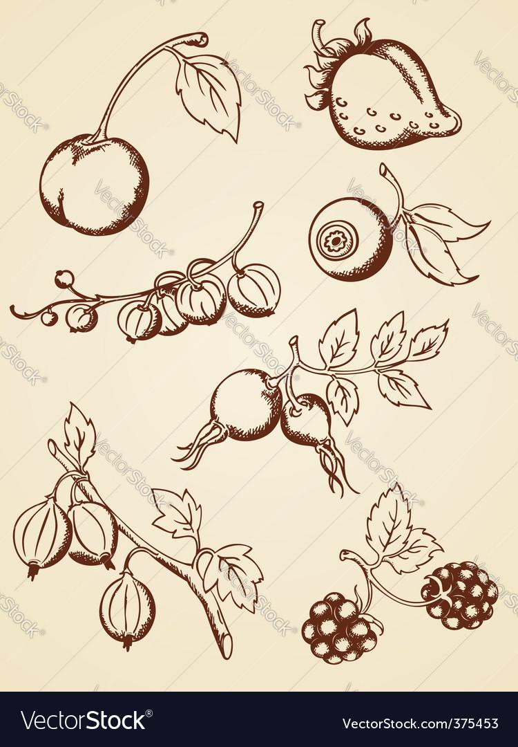 Hand drawn vintage berries vector image