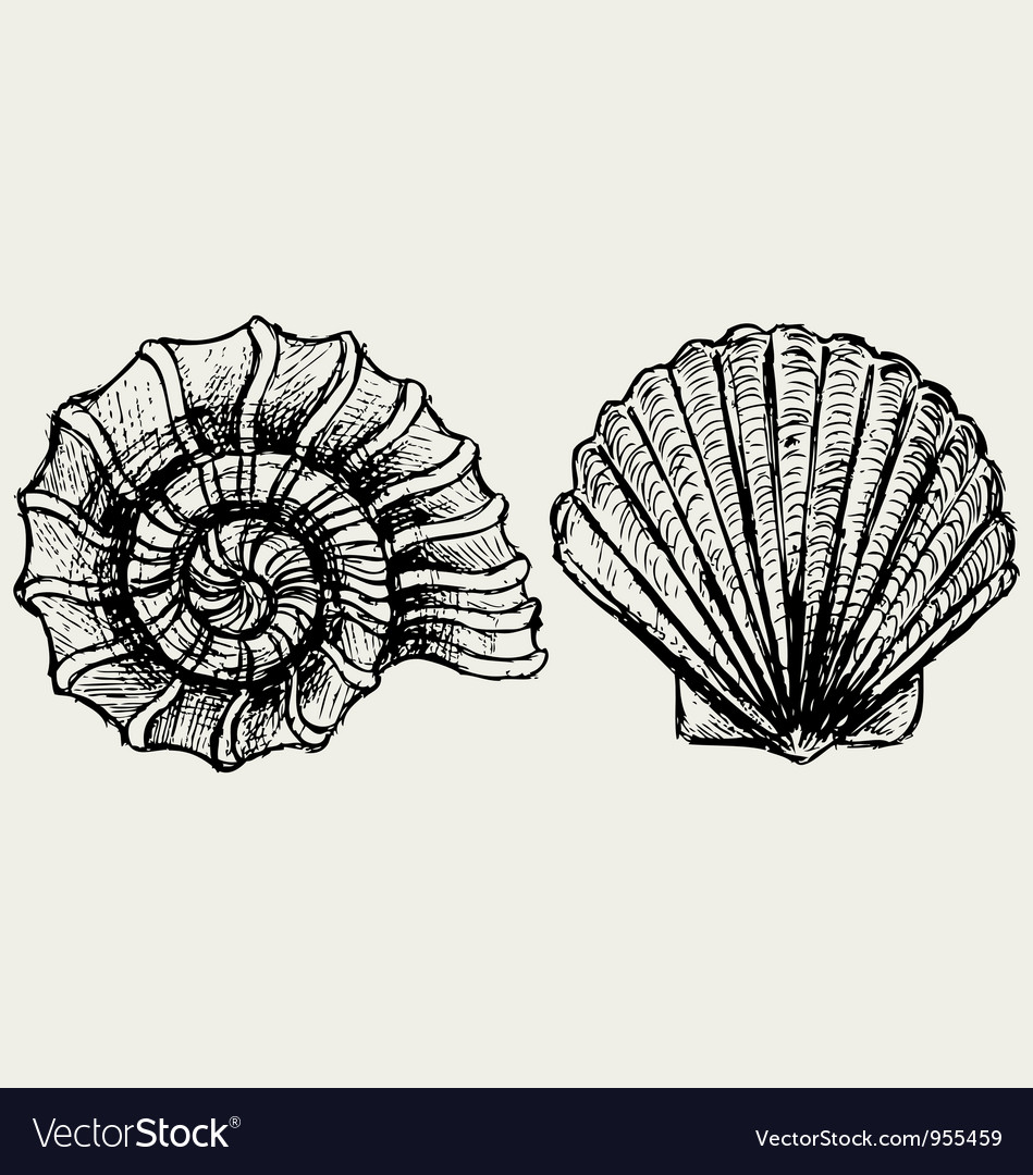 Sea snail and scallop shell vector image