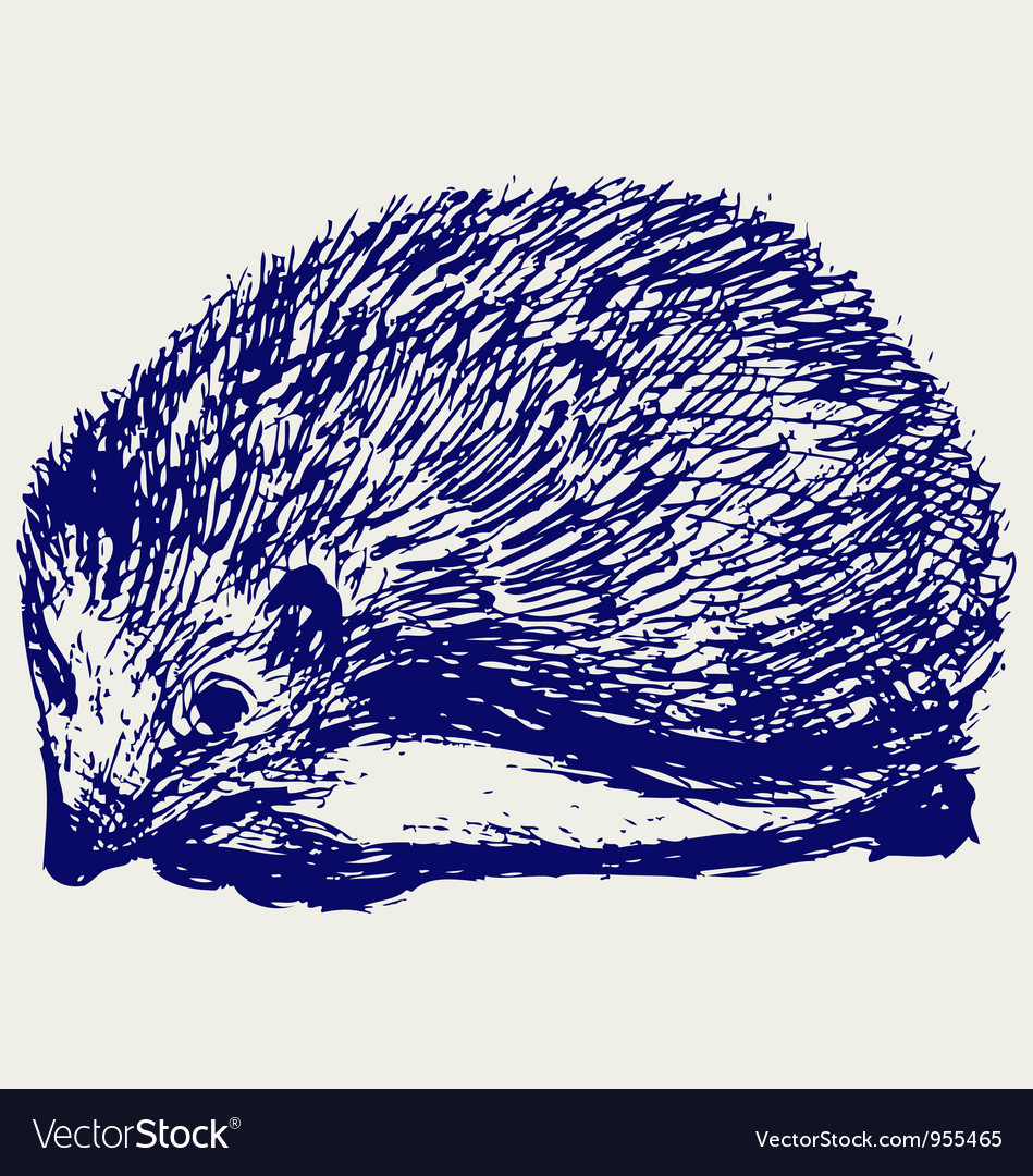 Hedgehog animal vector image