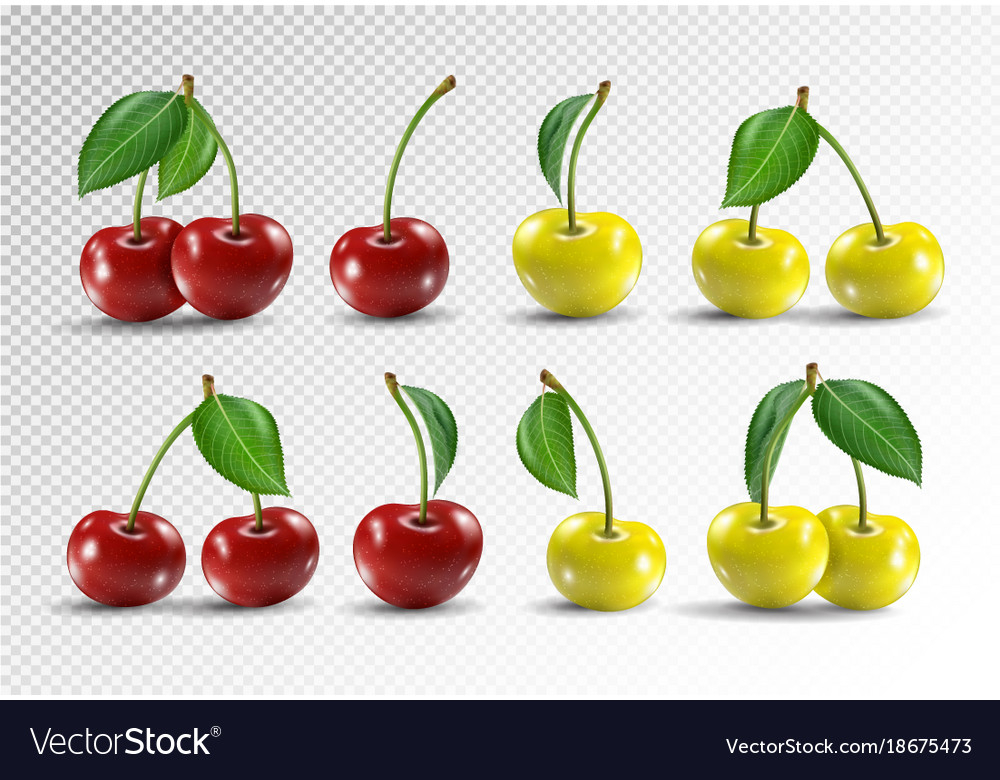 Cherry realistic fruit icons set vector image
