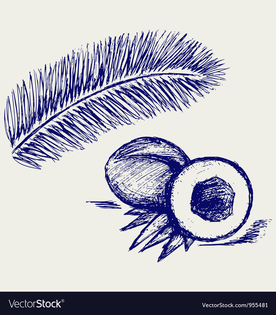Coconut and palm treeCoconut and palm tree Vector Image