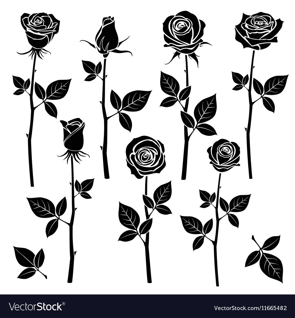 Rose silhouettes spring buds symbols vector image
