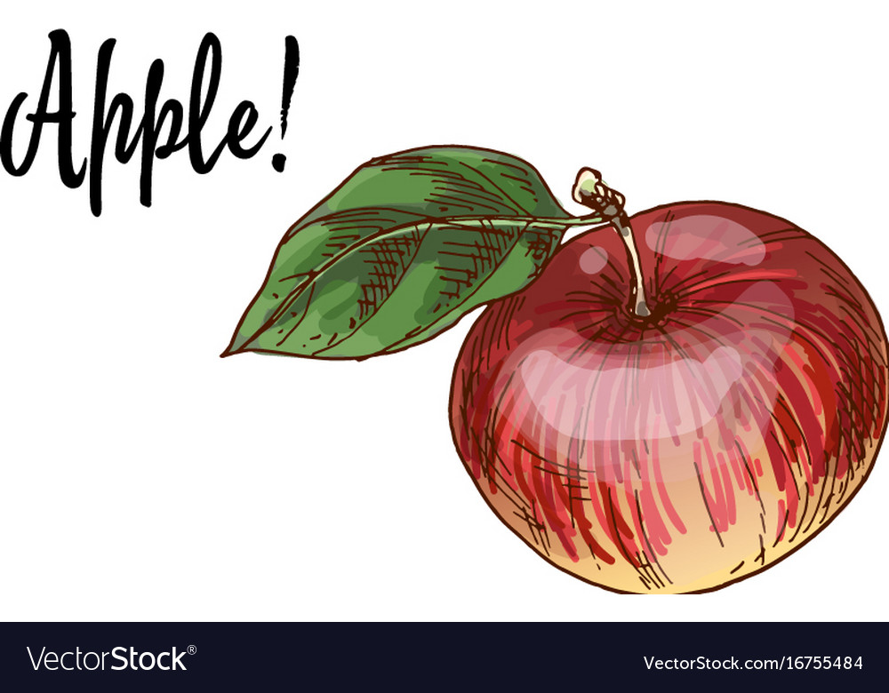 Ripe delicious red apples with green leaf vector image