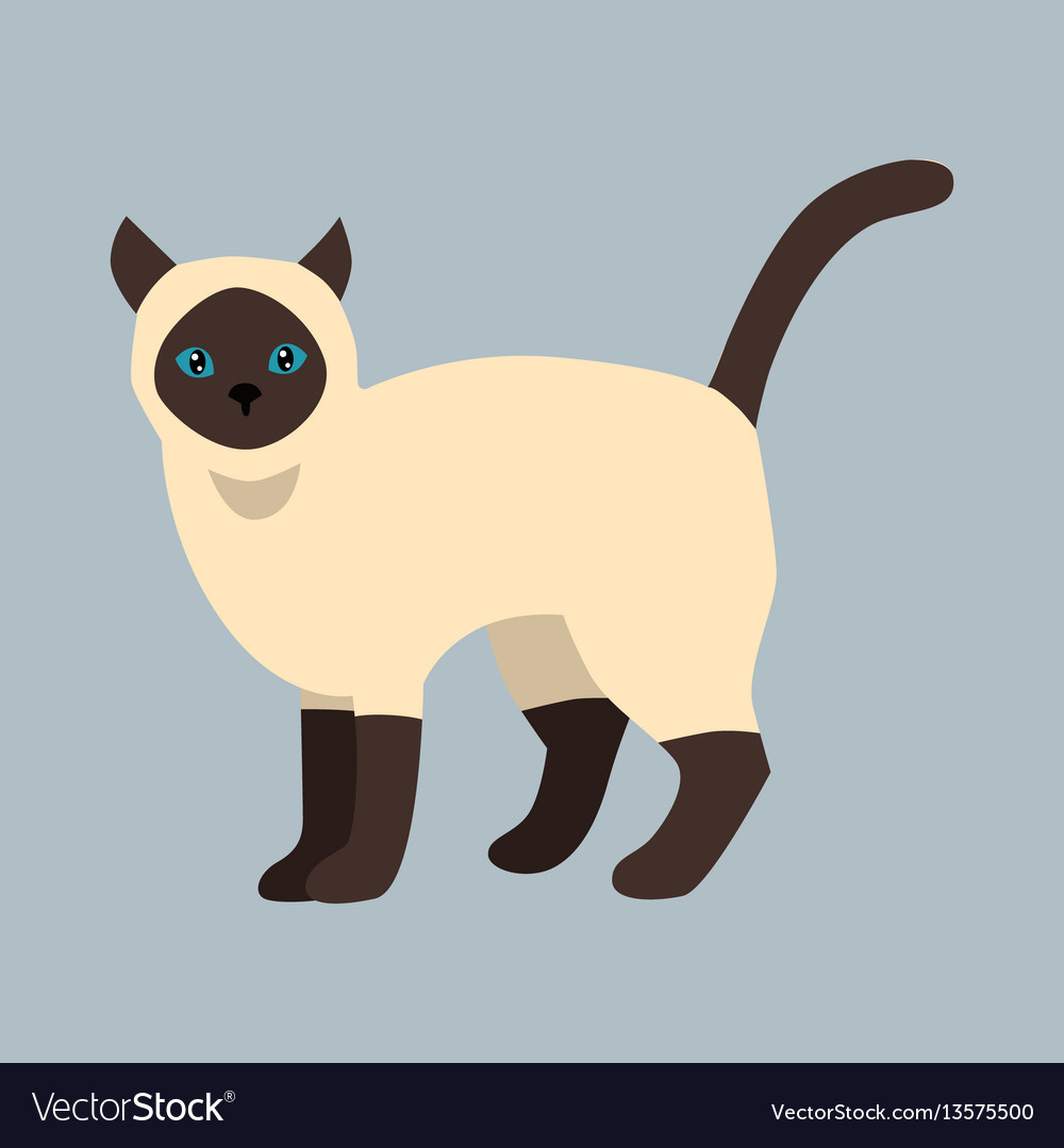 Cat breed siamese cute pet white black fluffy vector image