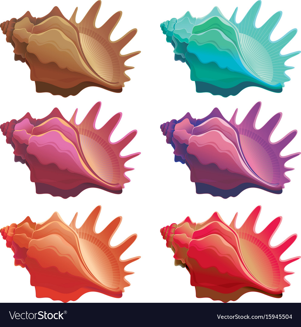 Collection of various colorful seashell vector image