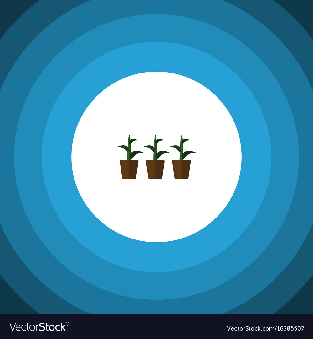 Isolated plant flat icon flowerpot element vector image