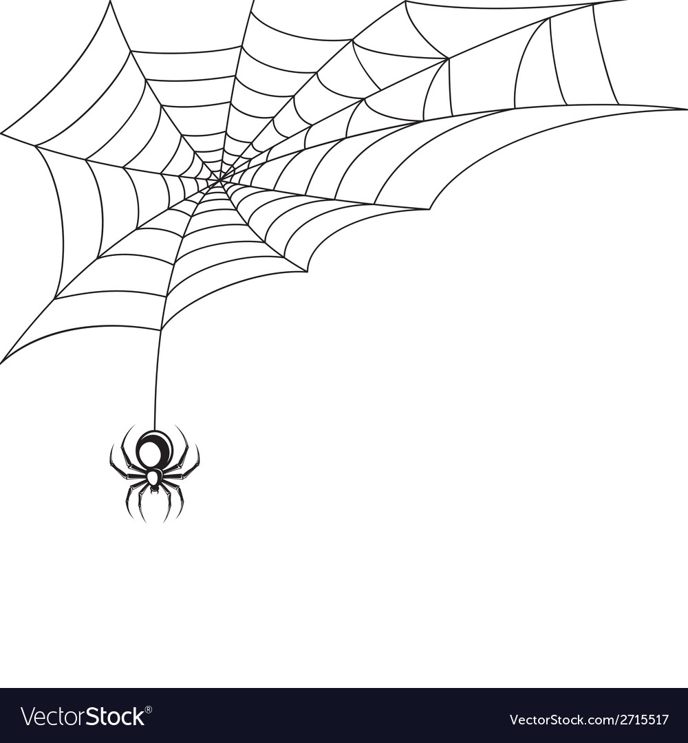 Spider web wallpaper vector image