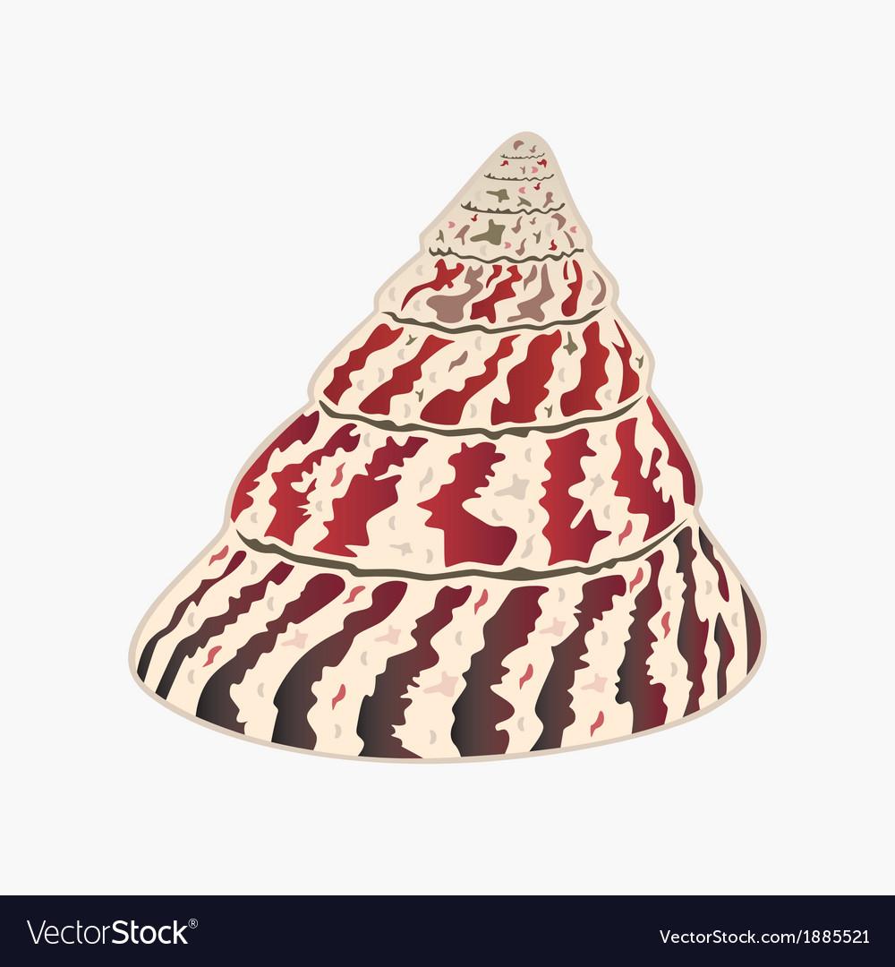 Seashell Trochus niloticus eps10 vector image
