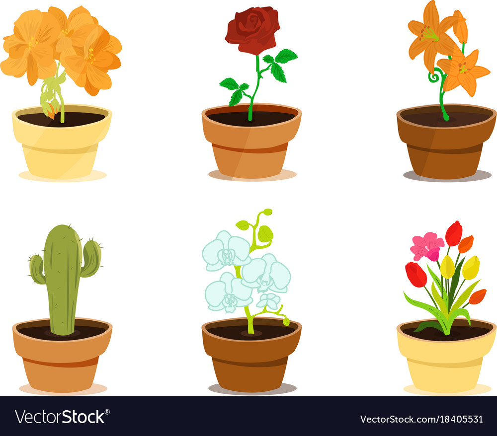 stock illustration vector decorative in photo tree with cartoon pots style pink bonsai green two flowers and decor