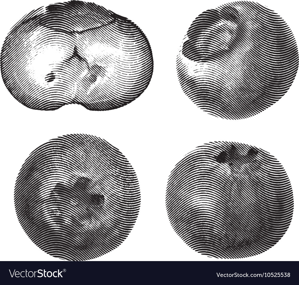 Blueberry drawn sketch isolated on white vector image