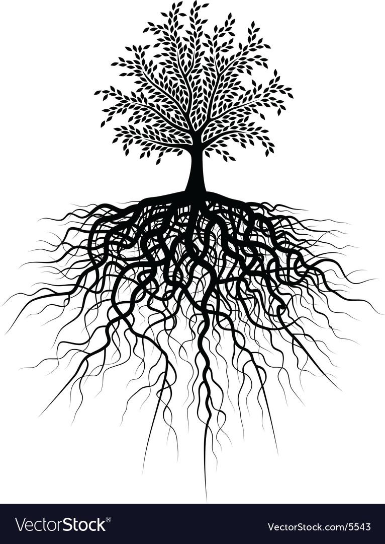 Root tree vector image