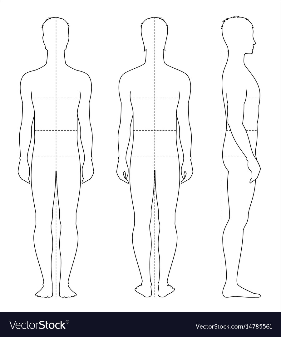 Mens Body Measurements Royalty Free Vector Image