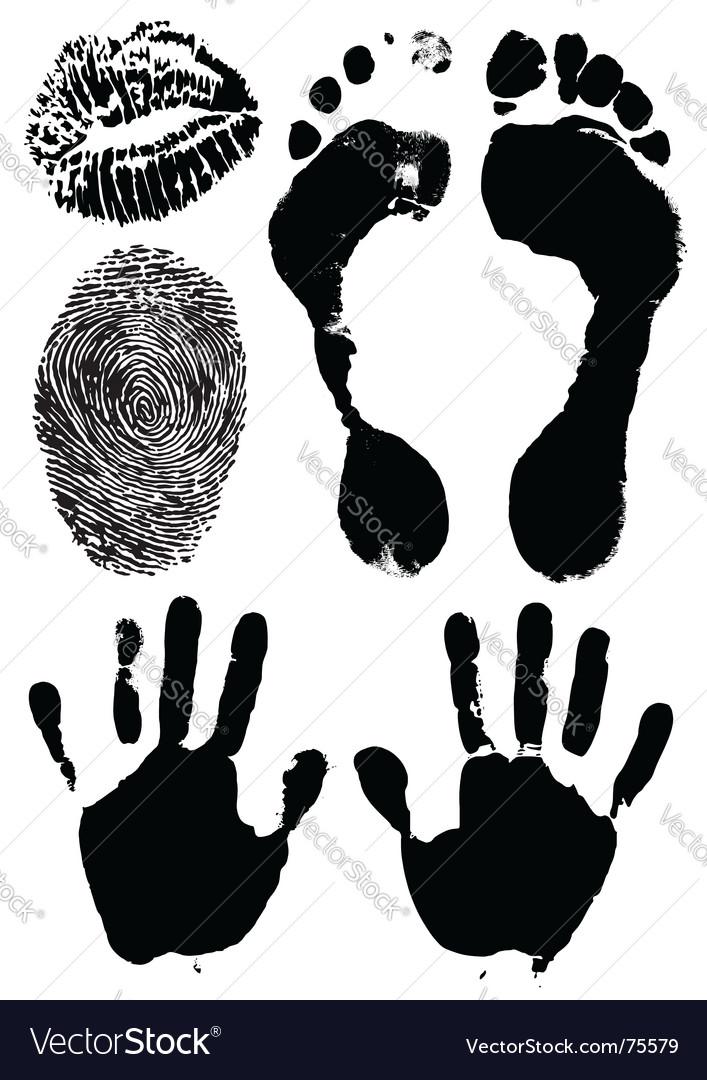 Human hands feet lips vector image