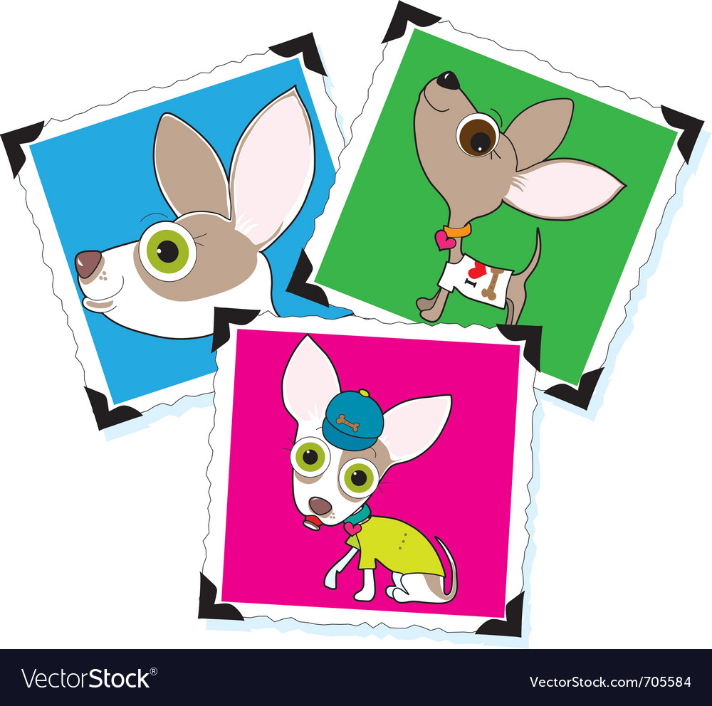 Chihuahua photographs vector image