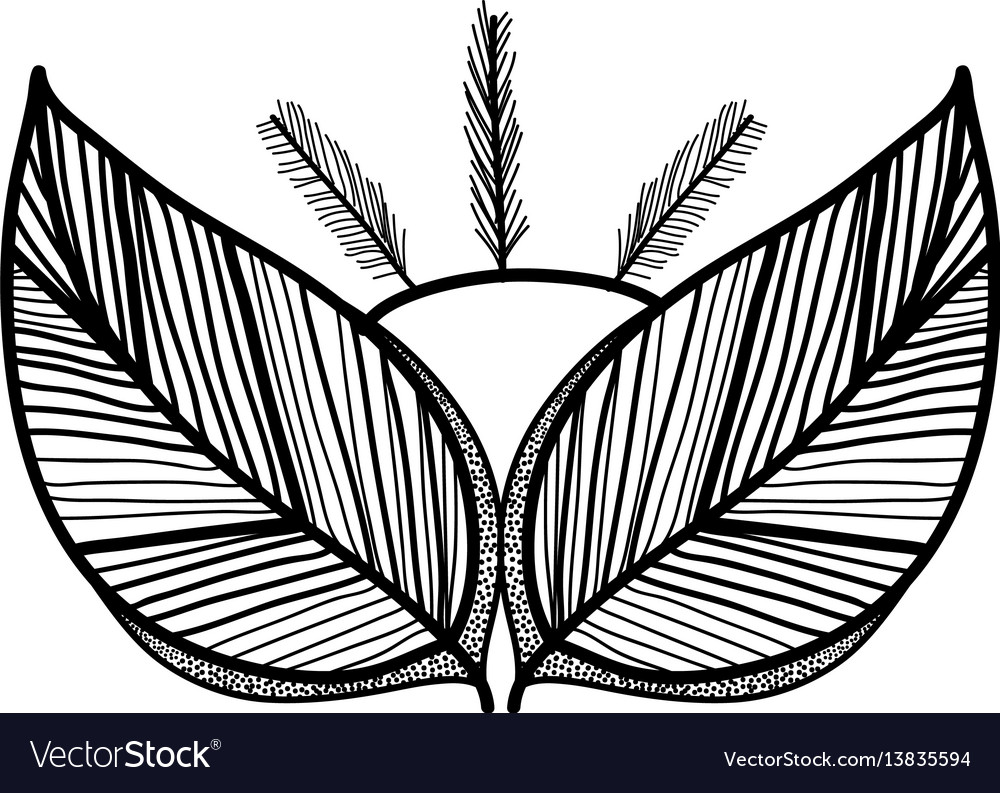 Rustic feathers with leaves decoration vector image