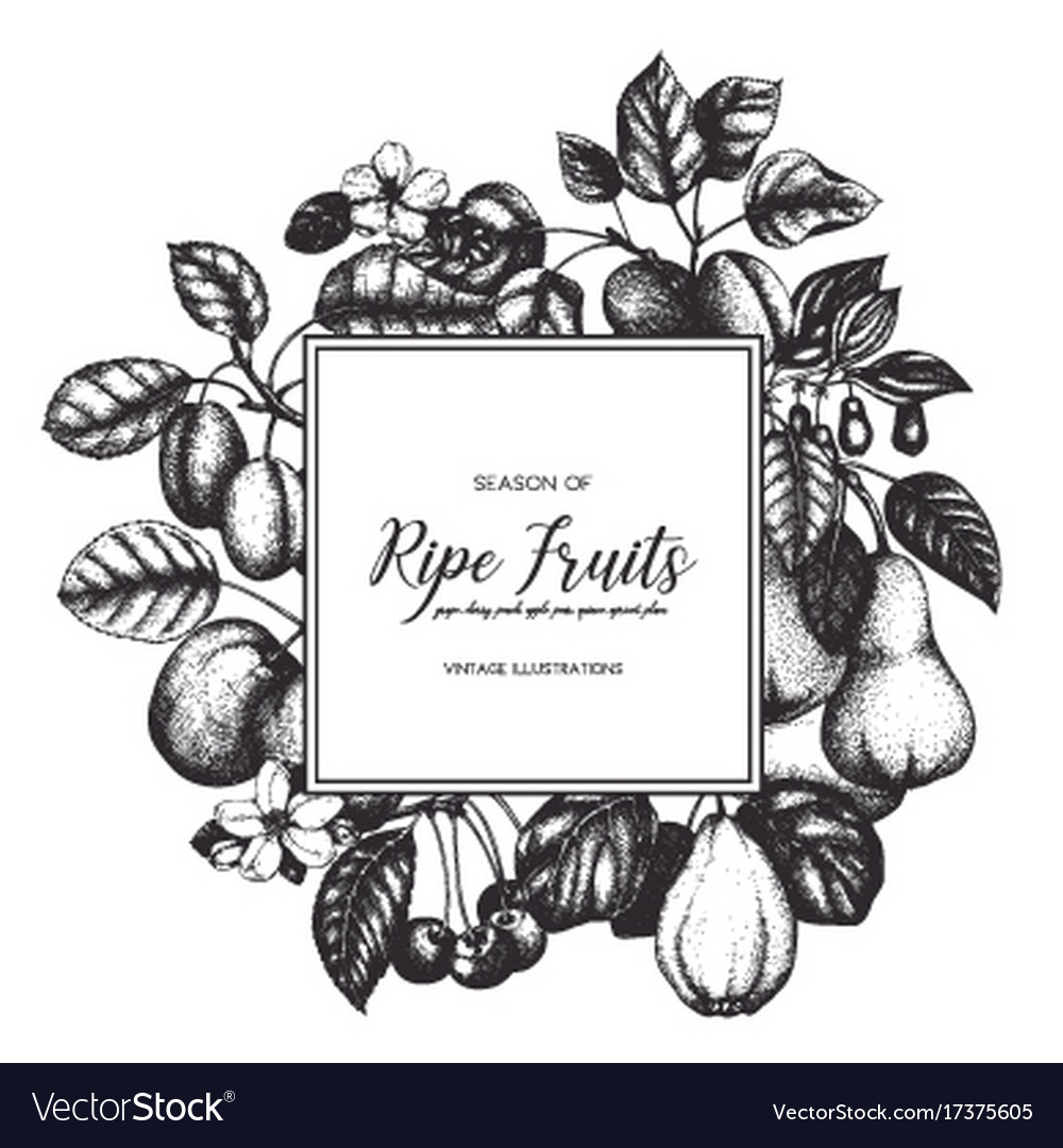 Vintage fruits card design vector image