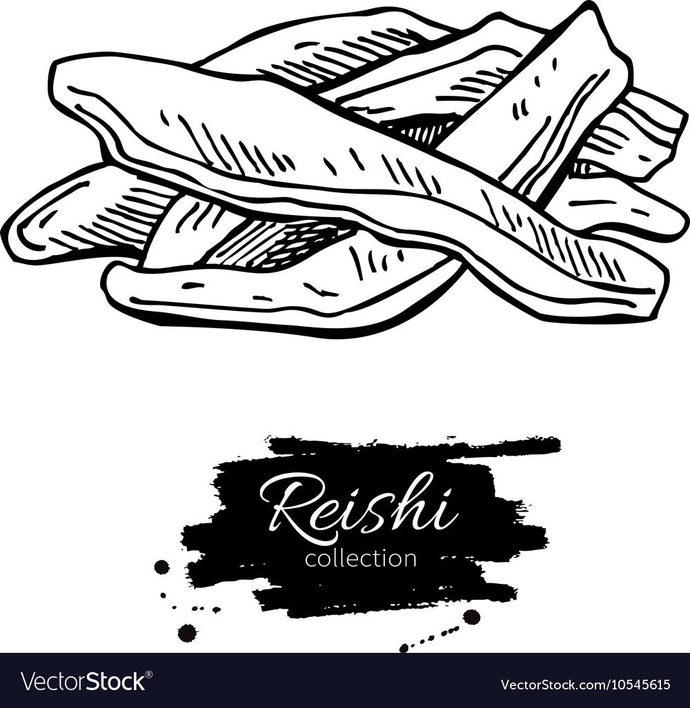 Reishi mushroom superfood drawing Isolated vector image