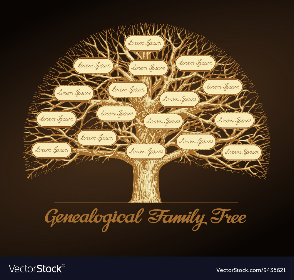 Genealogical family tree Dynasty vector image