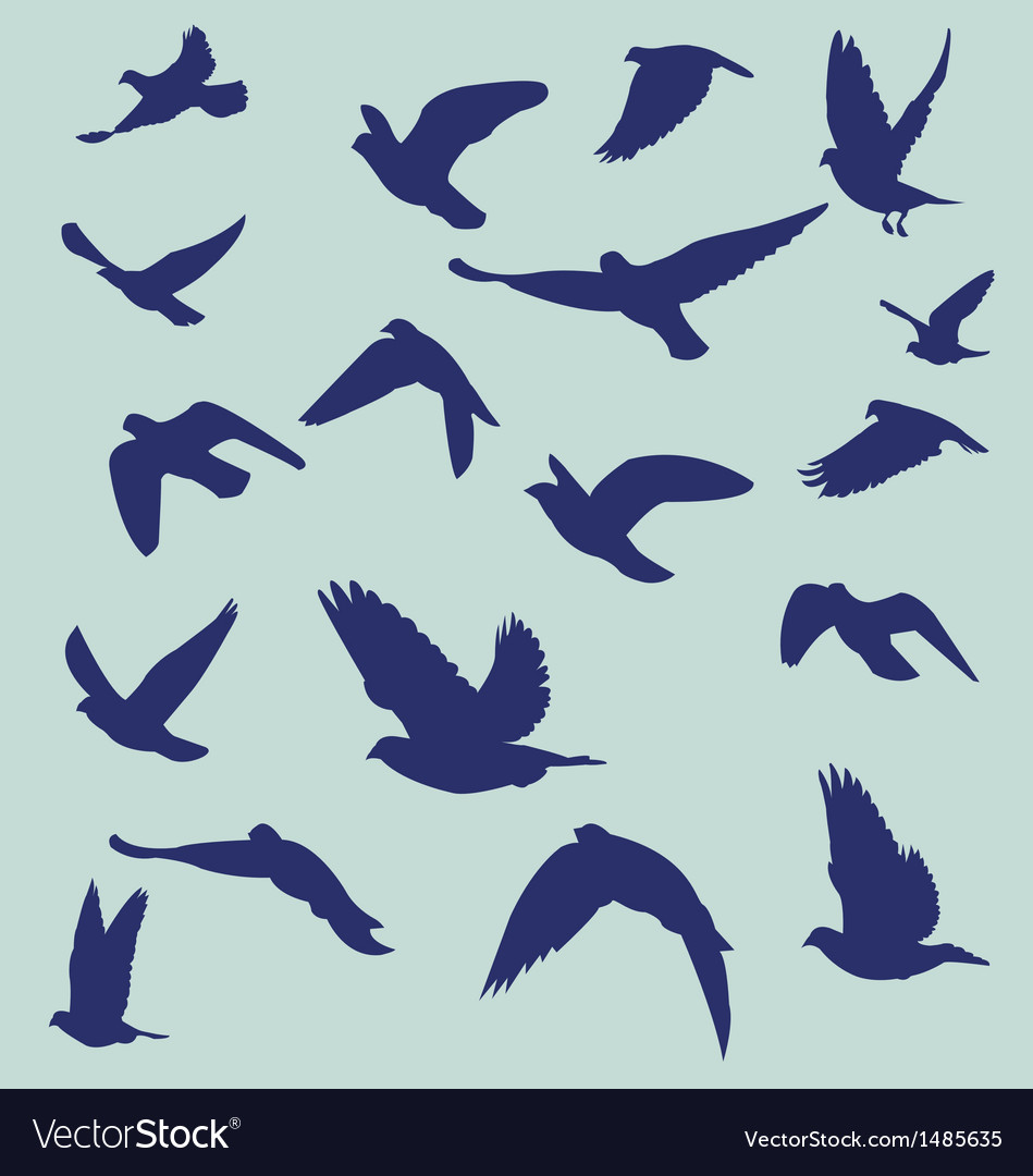 Silhouetted flying bird vector image