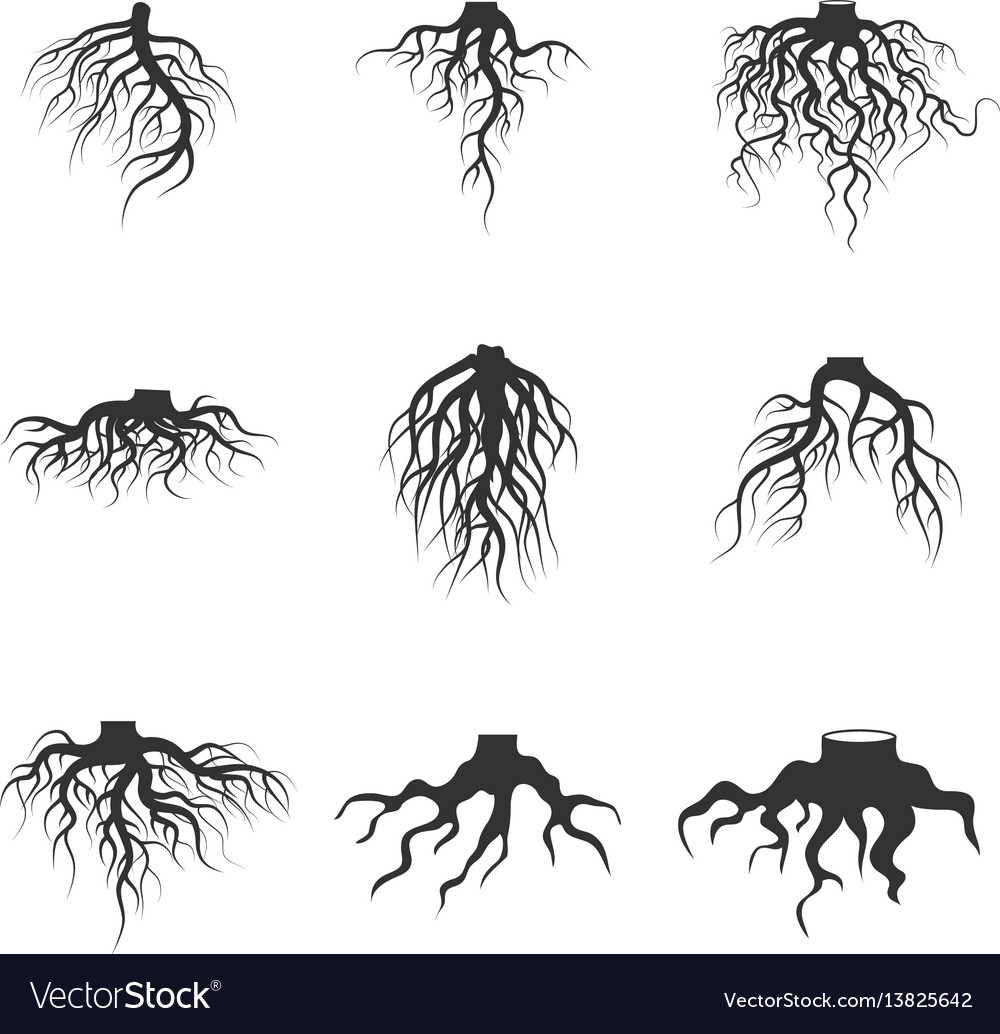 Tree and plant underground roots set vector image