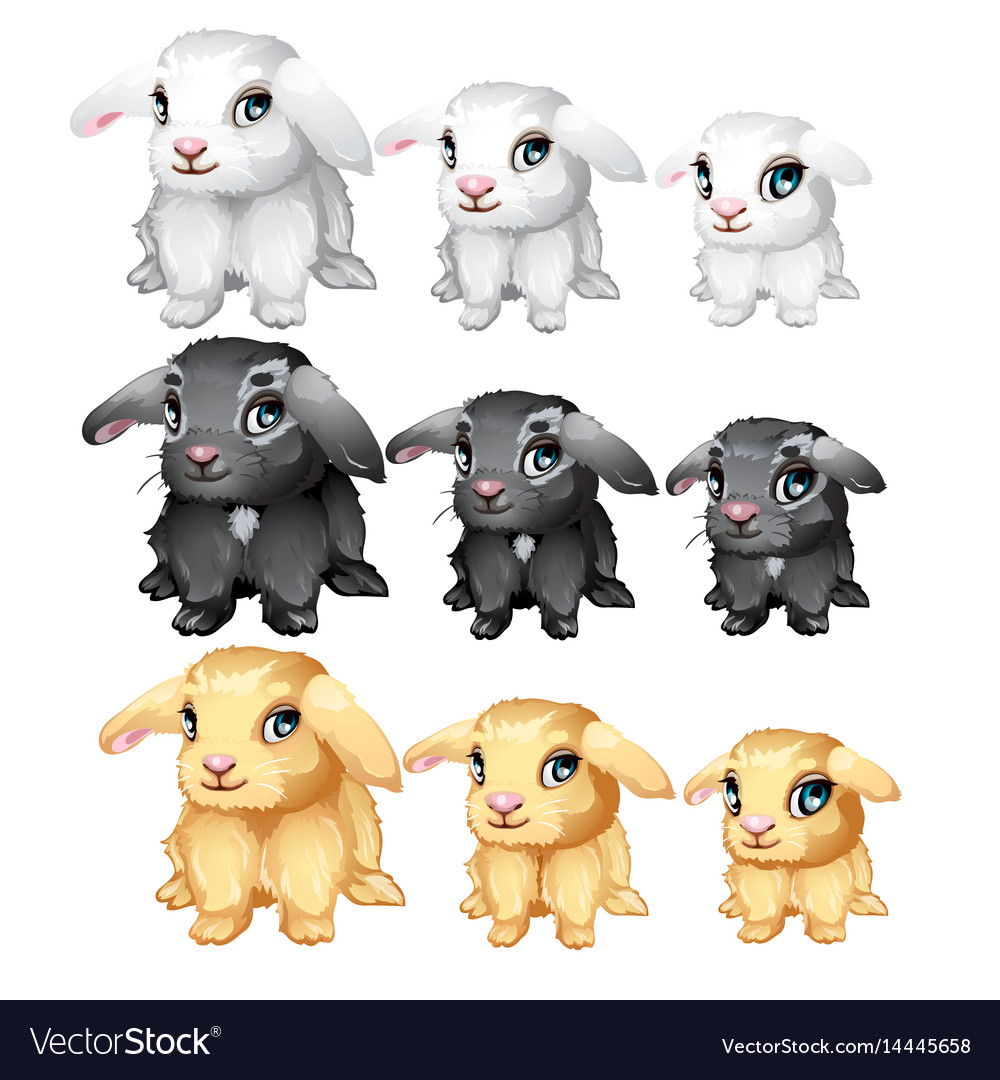 White black yellow fluffy bunny isolated vector image