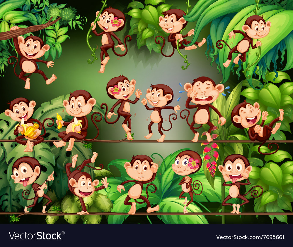 Monkeys doing different things in the jungle vector image
