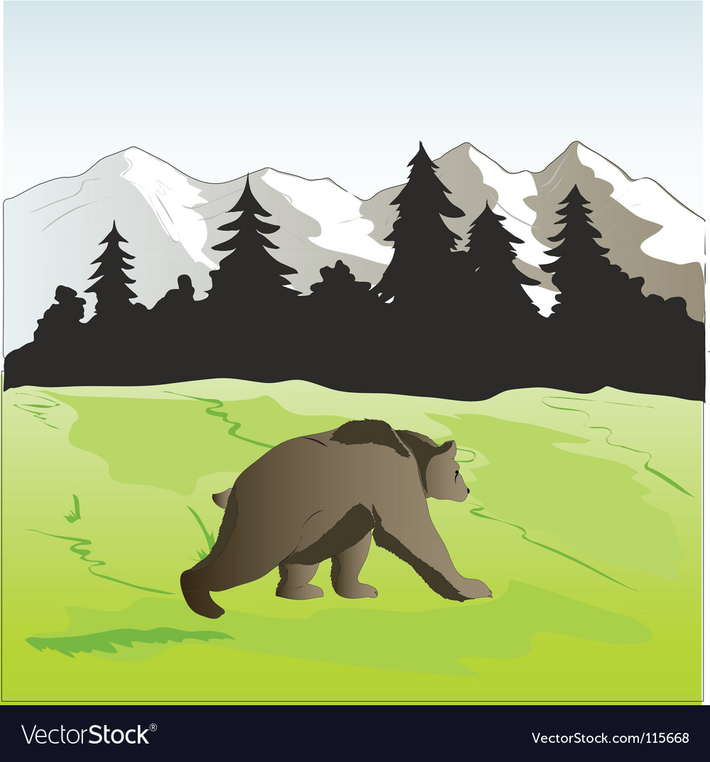 Bear vector image