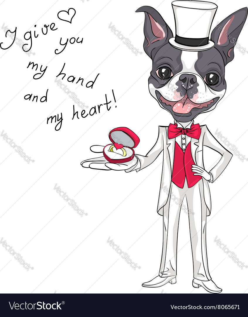 Fashion elegant groom dog Boston Terrier vector image