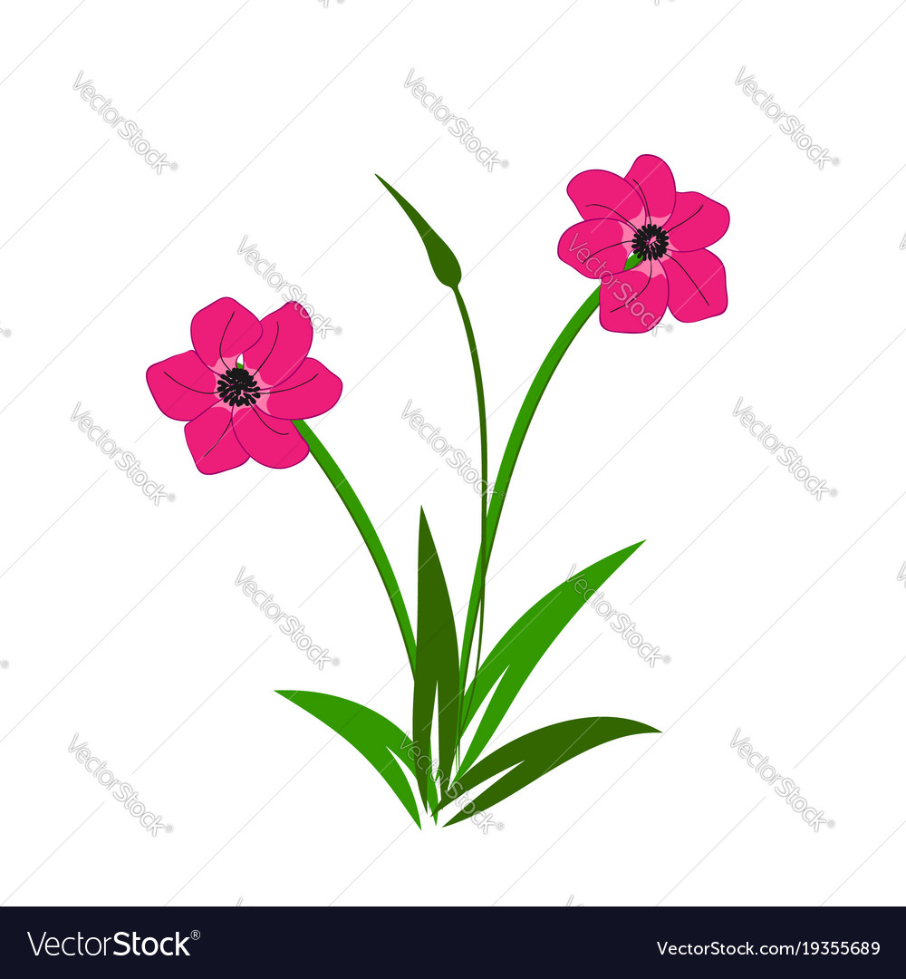 Wild pink flowers bouquet royalty free vector image wild pink flowers bouquet vector image mightylinksfo Image collections
