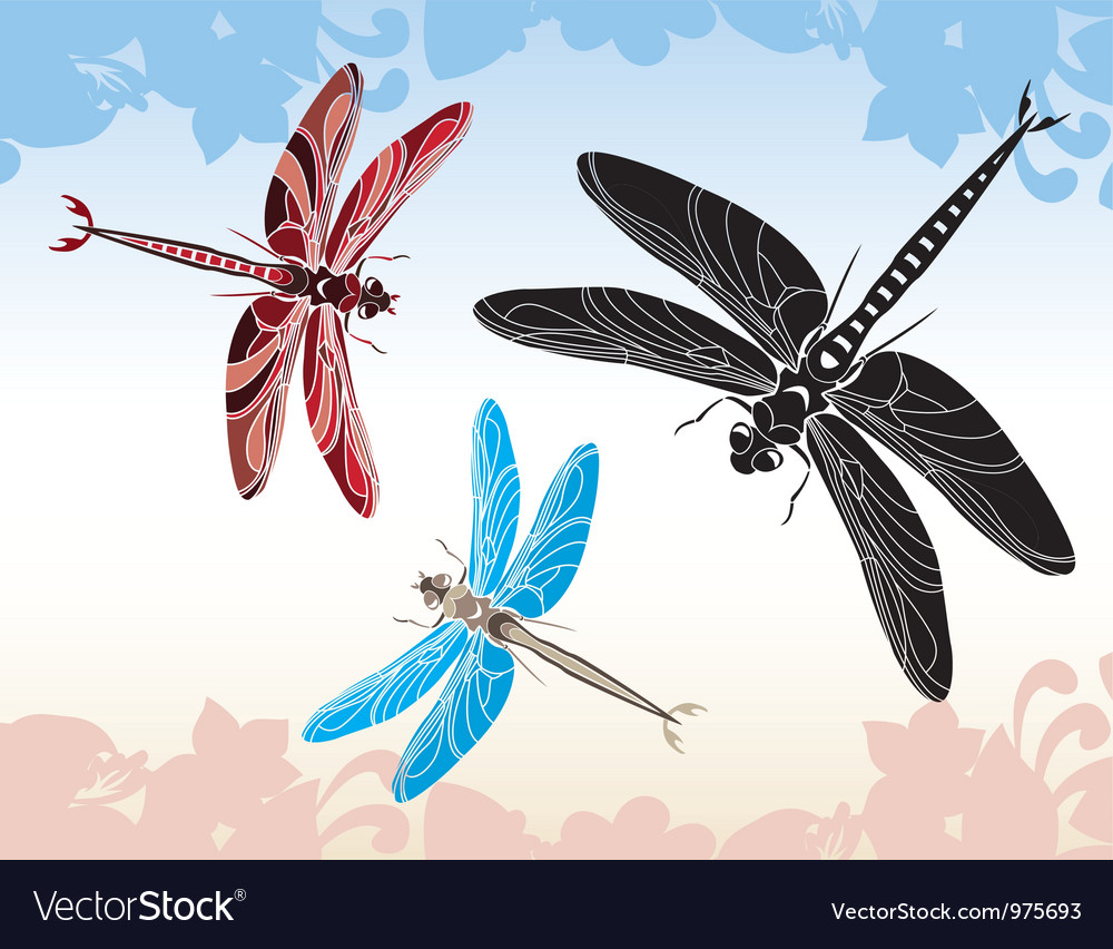 Set of dragonflies vector image