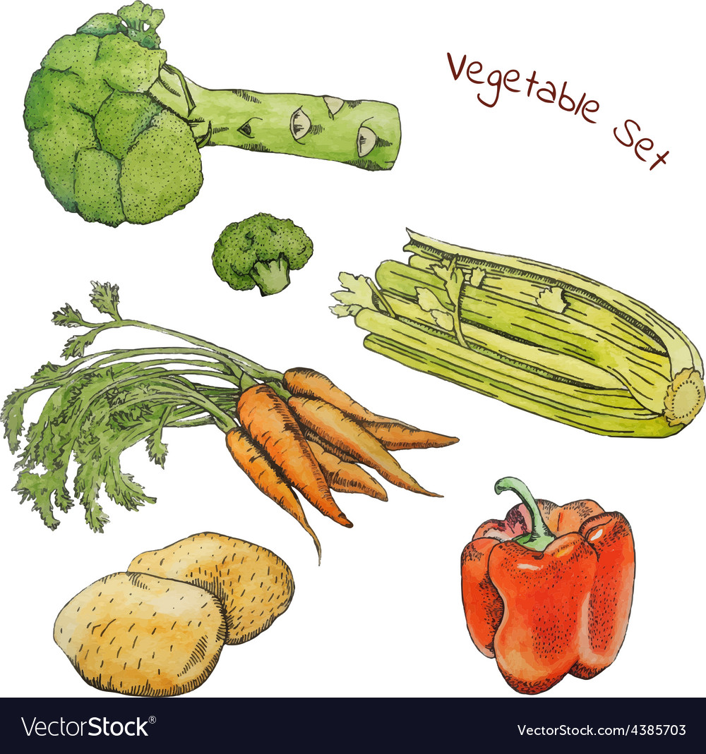 Watercolor vegetable sketches set with ink contour vector image