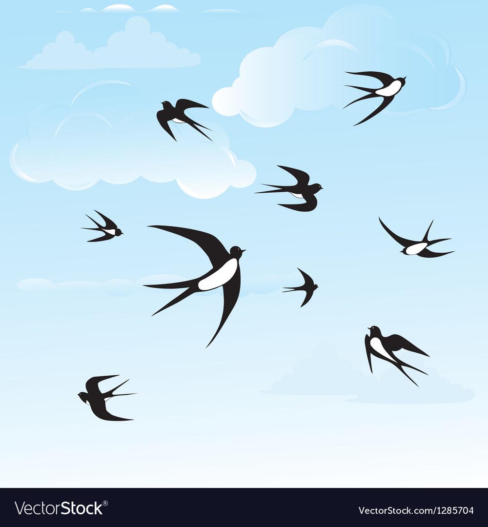 Bird swallow in sky vector image
