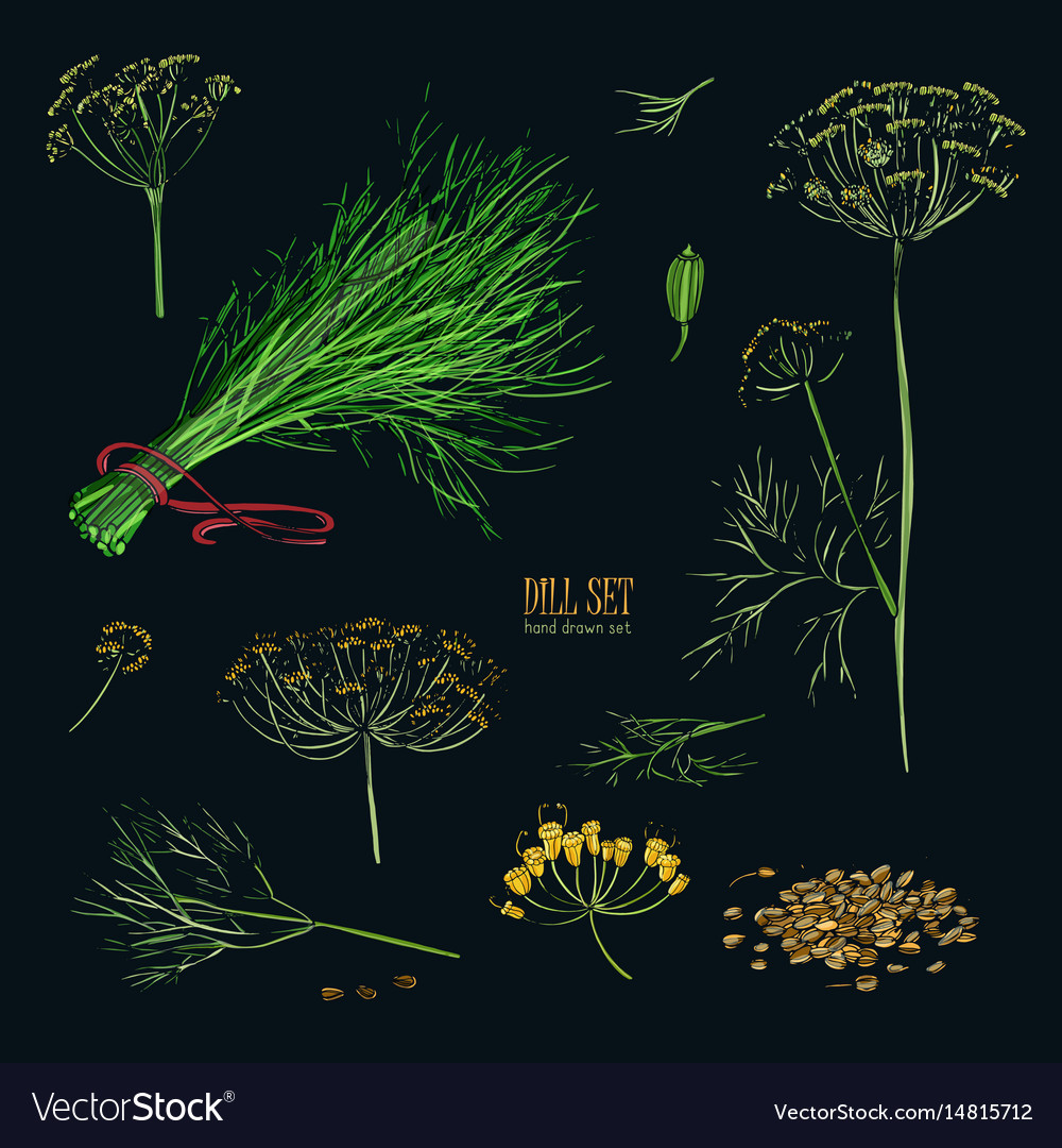 Dill set hand drawn colorful collection with vector image